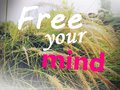 Free your mind typing with cogon grass in the background