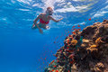 Freediver woman exploring coral descends into deep blue water with Royalty Free Stock Photo