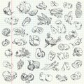 Freehand drawing fruit and vegetables on a sheet of exercise book vector illustration set Stock Images