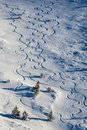 Freeride skying tracks Royalty Free Stock Photo
