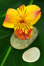 Freesia on a Leaf with Stones Royalty Free Stock Photo