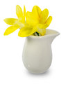 Freesia in the milk pitcher pictured Royalty Free Stock Images