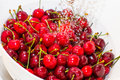 Freezed drops over the ripe cherry rinsed with water of cherries in white colander Royalty Free Stock Photos