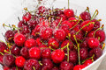 Freezed drops over the ripe cherry rinsed with water of cherries in white colander Stock Image
