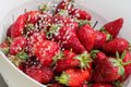 Freezed drops over the ripe strawberry rinsed with water of strawberries in white colander Royalty Free Stock Images