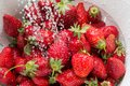 Freezed drops over the ripe strawberry rinsed with water of strawberries in white colander Stock Images
