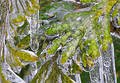 Freezed tree Royalty Free Stock Photos