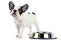 French bulldog puppy with bowl isolated on white Stock Photo