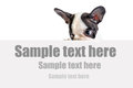 French bulldog puppy with white board and sample text Stock Images