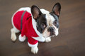 French bulldog in santa costume for christmas dressed up Stock Photography