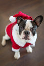 French bulldog in santa costume for christmas dressed up Stock Photo