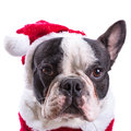 French bulldog in santa costume for christmas over white Stock Photography