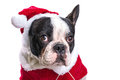 French bulldog in santa costume for christmas over white Stock Photo
