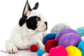 French bulldog with threadballs isolated on white background