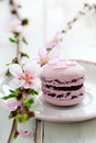 French macaroons pink decorated cherry blossom Stock Photography