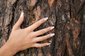 French manicure on a background of a bark-1 Royalty Free Stock Photo