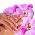 French Manicure. Beautiful Female Hands Royalty Free Stock Photo
