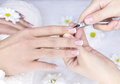 French manicure for female Stock Photos