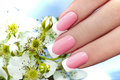 French manicure. Royalty Free Stock Photo