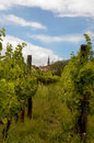 French vineyard Stock Photography
