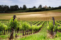 French vineyard Royalty Free Stock Photo