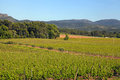 French vineyard provence panoramic view of a in france Stock Photos