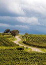 French vineyard road Stock Photography