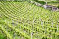 French vineyards view of a in saint emilion in the bordeaux region Royalty Free Stock Image