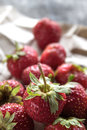 Fresco apenas escogido fresas Imagen de archivo libre de regalías