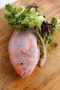 Fresh african tilapia on a timber board Stock Photos