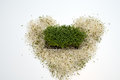 Fresh alfalfa sprouts Stock Photos