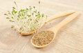 Fresh alfalfa sprouts and seeds - closeup. Royalty Free Stock Photo