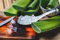 stock image of  Fresh Aloe Vera