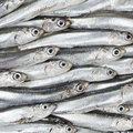 Fresh anchovies prepared seafood background texture. Raw food. Stock Photos