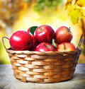 Fresh apples in basket over shiny golden yellow forest background Royalty Free Stock Photos
