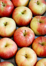 Fresh apples - fruit background Stock Images