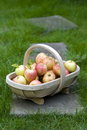 Fresh apples in a wooden trug Stock Photos