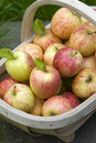 Fresh apples in a wooden trug Royalty Free Stock Photos
