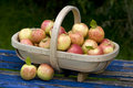 Fresh apples in a wooden trug Royalty Free Stock Images