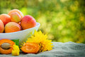 Fresh apricots are a delicious fruit Stock Photos