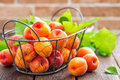 Fresh apricots with leaves in basket Royalty Free Stock Photo