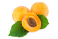 Fresh apricots with leaves  on white Royalty Free Stock Photo