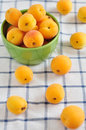Fresh apricots some cut in half Stock Images