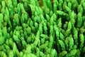 Fresh asparagus in market, selective focus Royalty Free Stock Photo