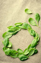 Fresh Baby spinach leaves on sackcloth background. Top view with copy space, round circle frame. Healthy, Ecology