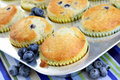 Fresh Baked Blueberry Muffins Stock Photography