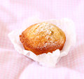 Fresh baked homemade healthy muffins pic Royalty Free Stock Photos