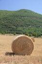 Fresh bales of hay Stock Image