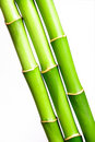 Fresh bamboo Stock Photography