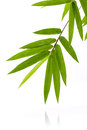 Fresh bamboo leaves border with water drop isolated on white bac Royalty Free Stock Photo